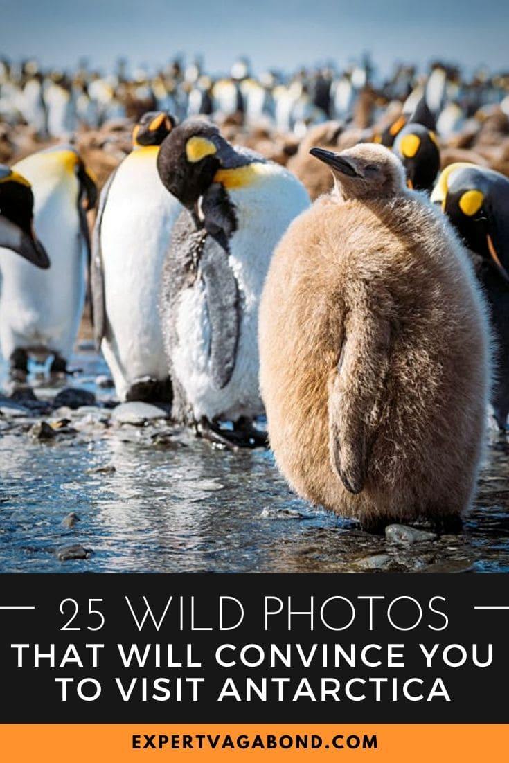 25 Wild Photos That Will Convince You To Visit Antarctica! #Antarctica #adventure #Travel