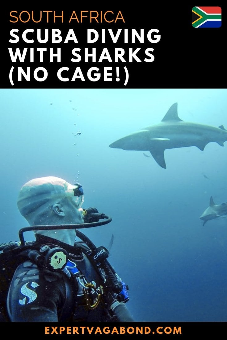 The ocean around me is filled with sharks. Now they're approaching me from all directions. I was under 30 feet of water without a cage in South Africa. More at ExpertVagabond.com
