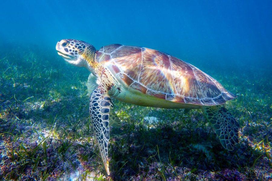 Akumal Beach Snorkeling