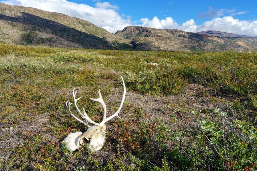 Arctic Circle Trail Bones