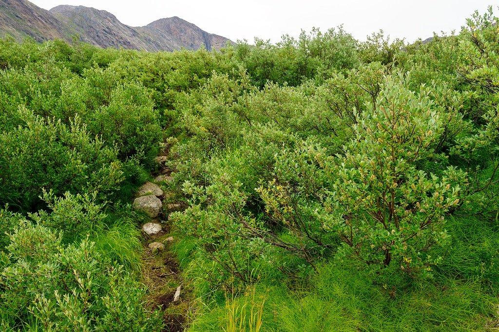 Arctic Circle Trail Trees