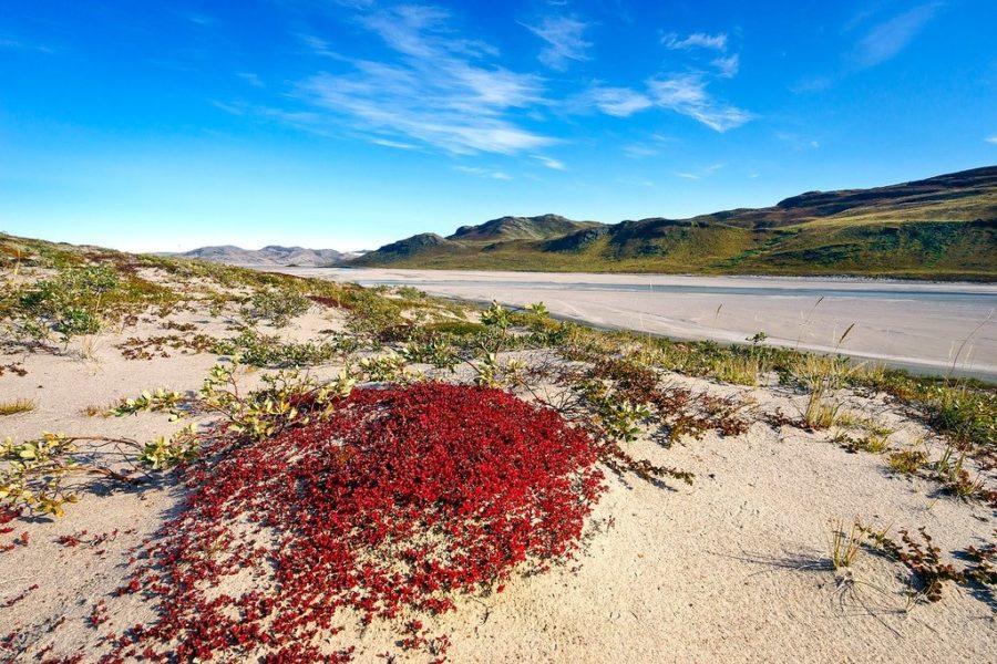 Desert in Greenland