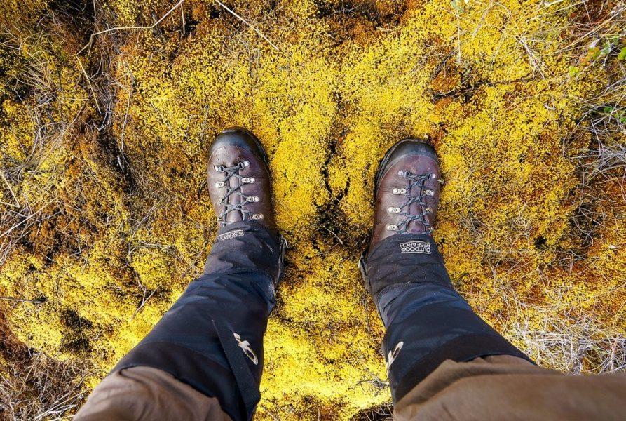 Peat Moss Greenland