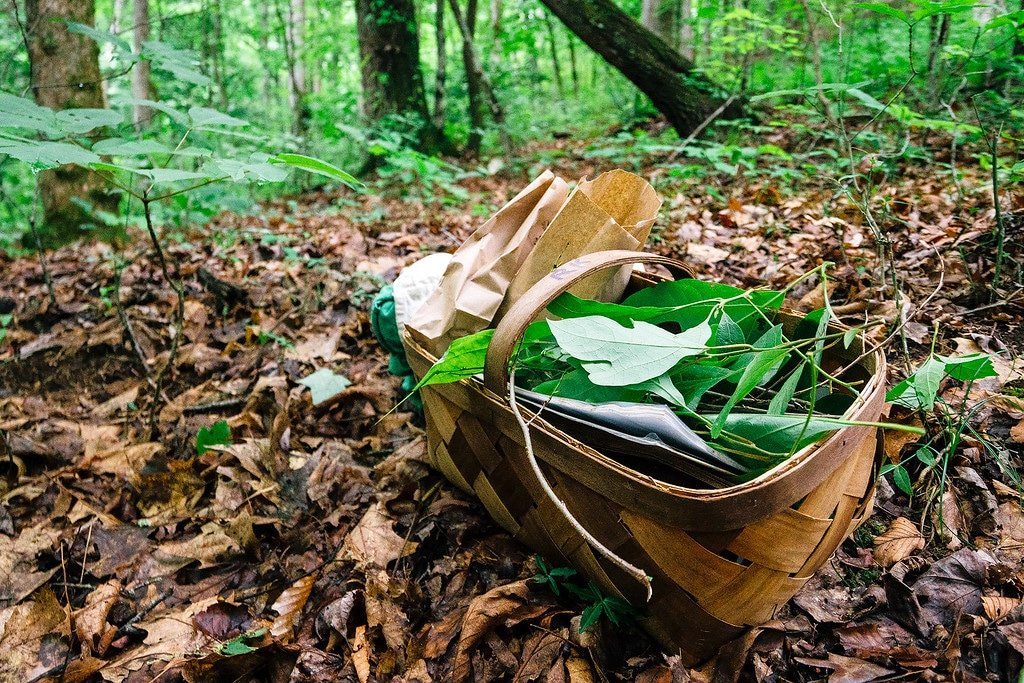 Foraging Tour in Asheville North Carolina