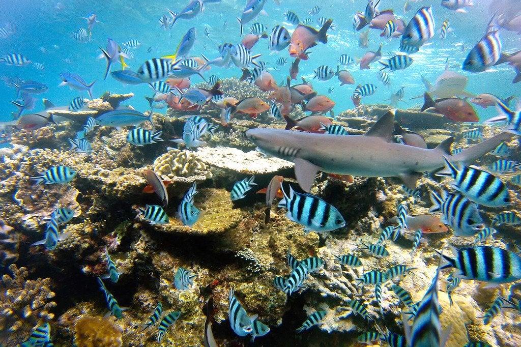 Tropical Fish Beqa Fiji