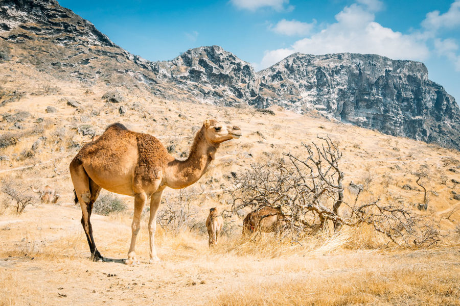 Middle East Travel Tips
