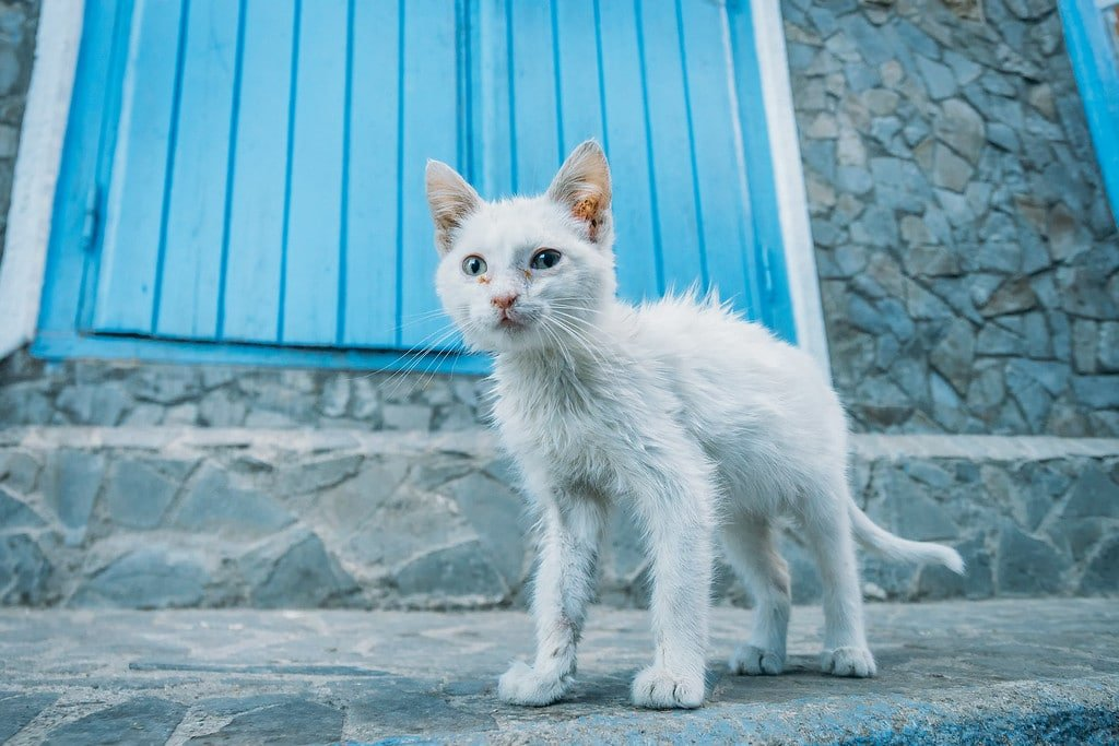 Cats in Morocco