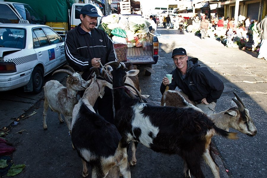 Fresh Goat's Milk