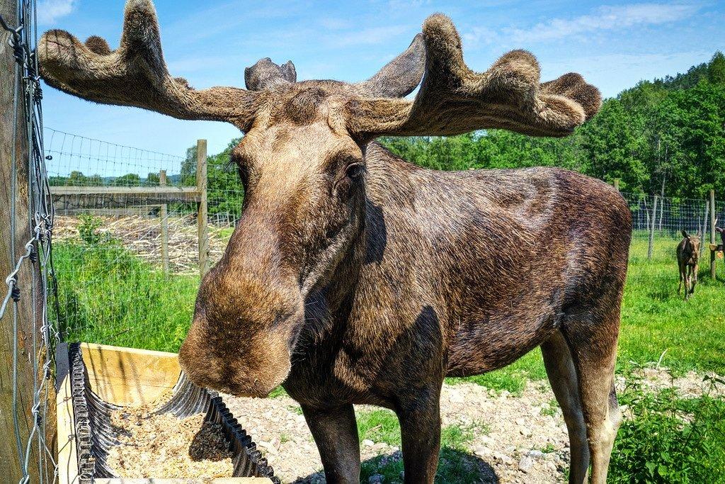 Dalsland Moose Park