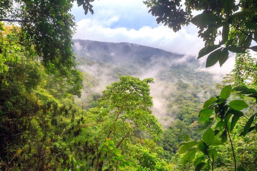 Darien Jungle Panama