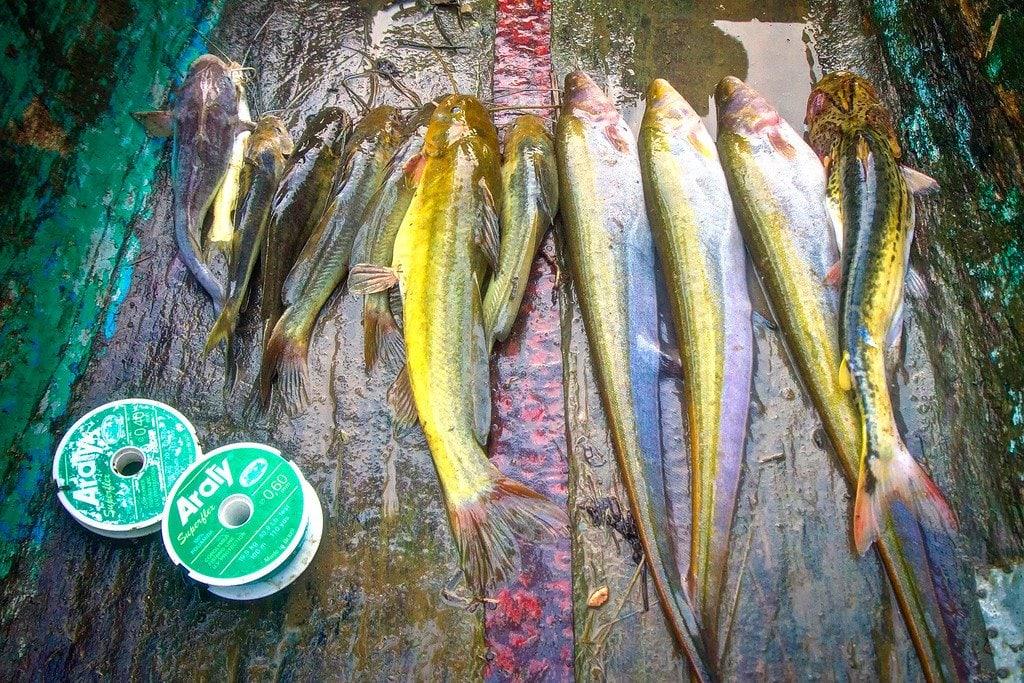Fishing Darien Panama
