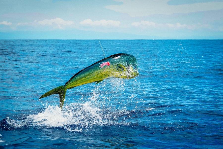 Mahi-Mahi fishing Florida Keys
