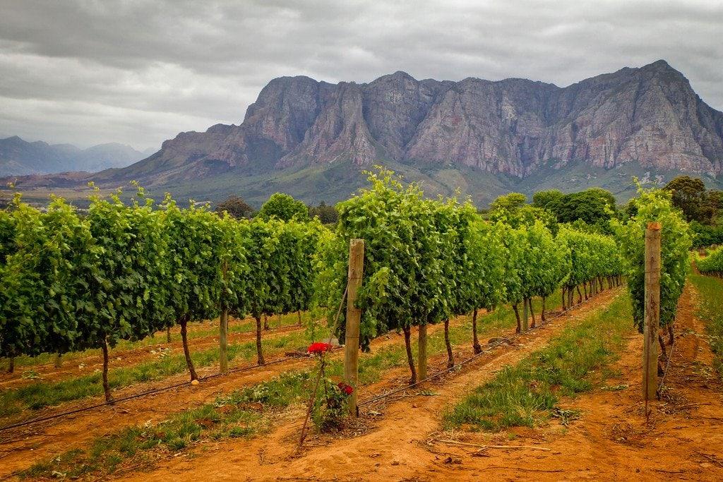 Vineyards of Stellenbosch South Africa