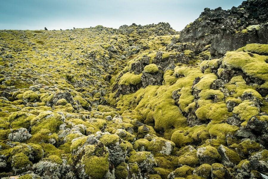 Iceland Green Volcanic Moss