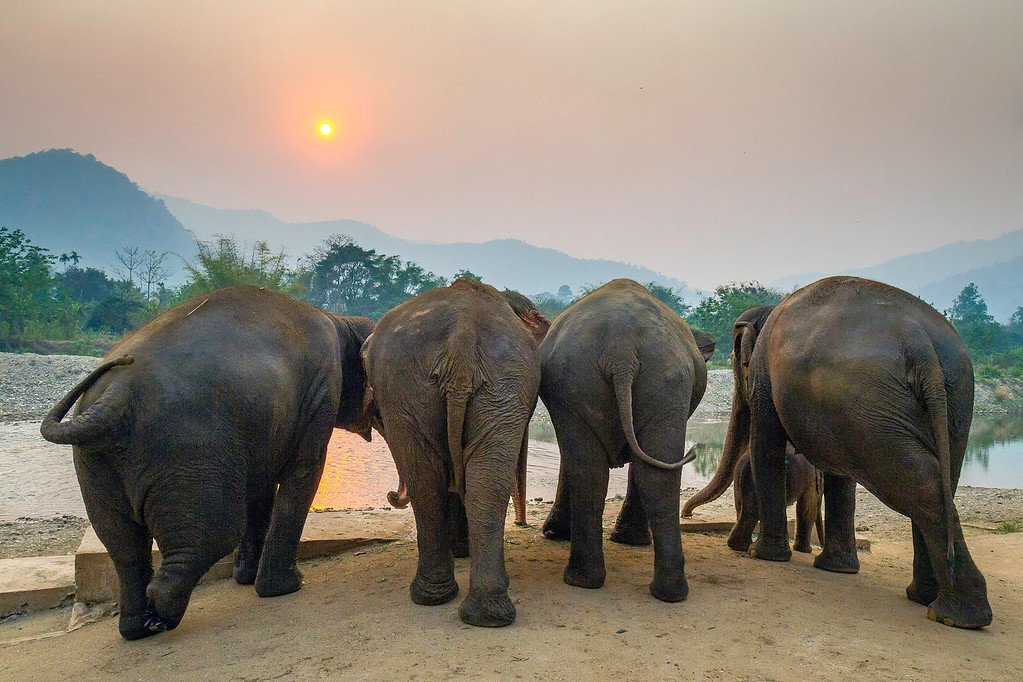 Elephants Watching the Sunset