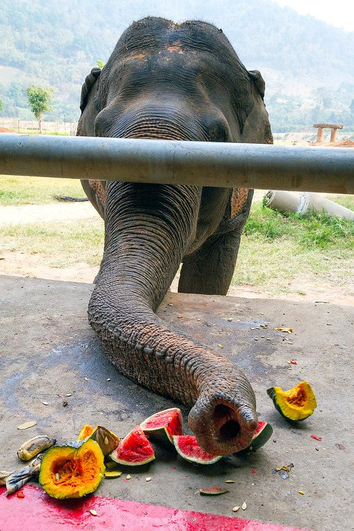 Elephant Eating Watermelon