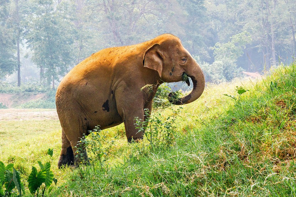 Saving Asian Elephants