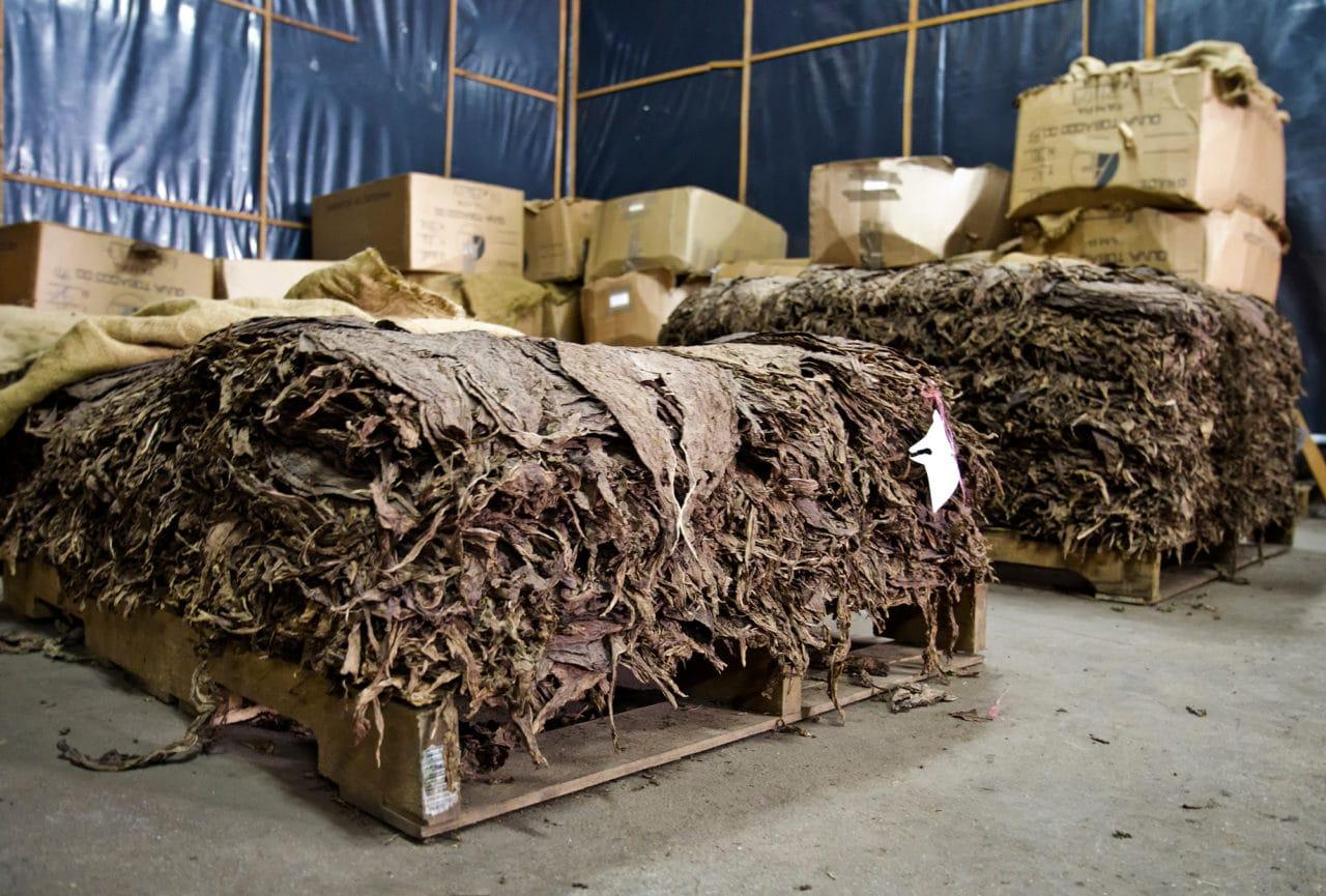 Esteli Nicaragua Tobacco Fermentation