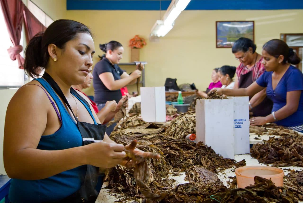 Esteli Nicaragua Tobacco Sorting