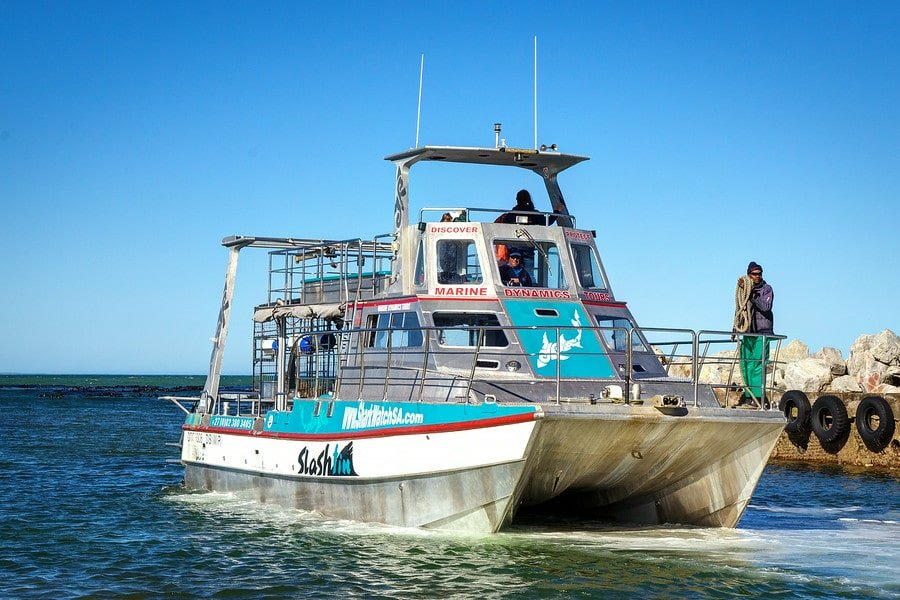 Shark Tour Boat South Africa