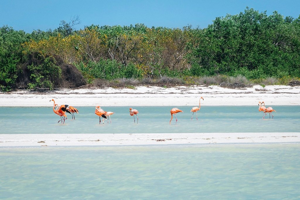 Flamingos at Isla Holbox
