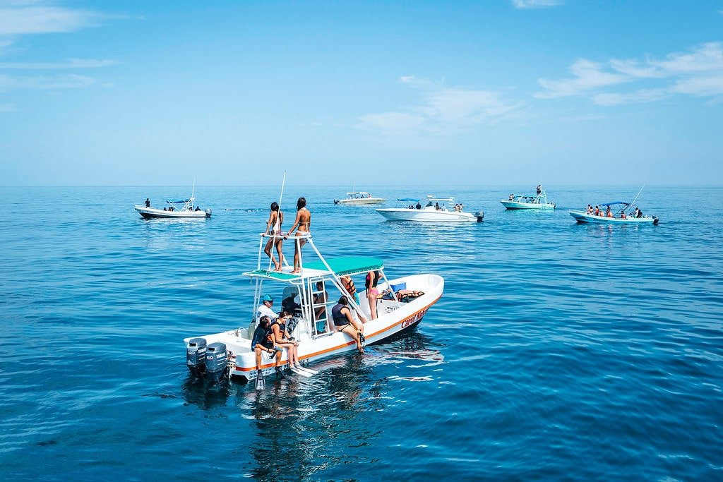 Whale Shark Boats