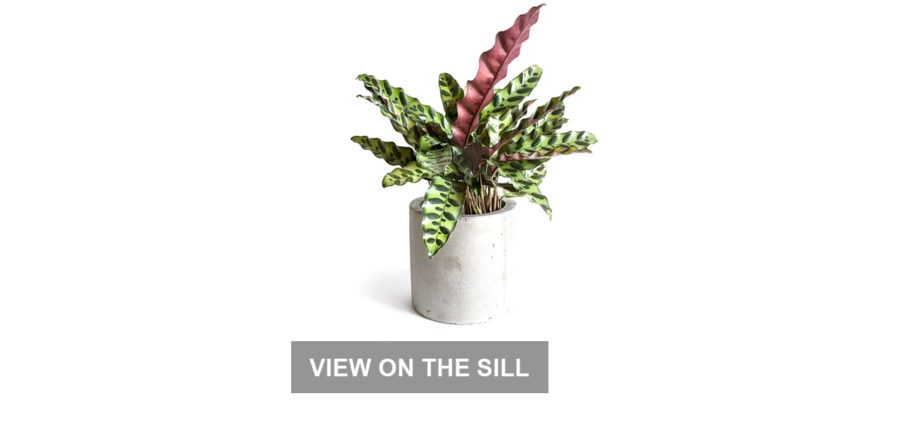 Work From Home Gifts: House Plants