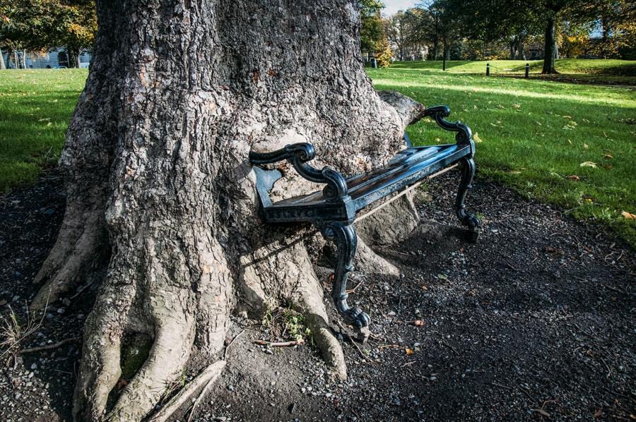 Dublin Itinerary: The Hungry Tree