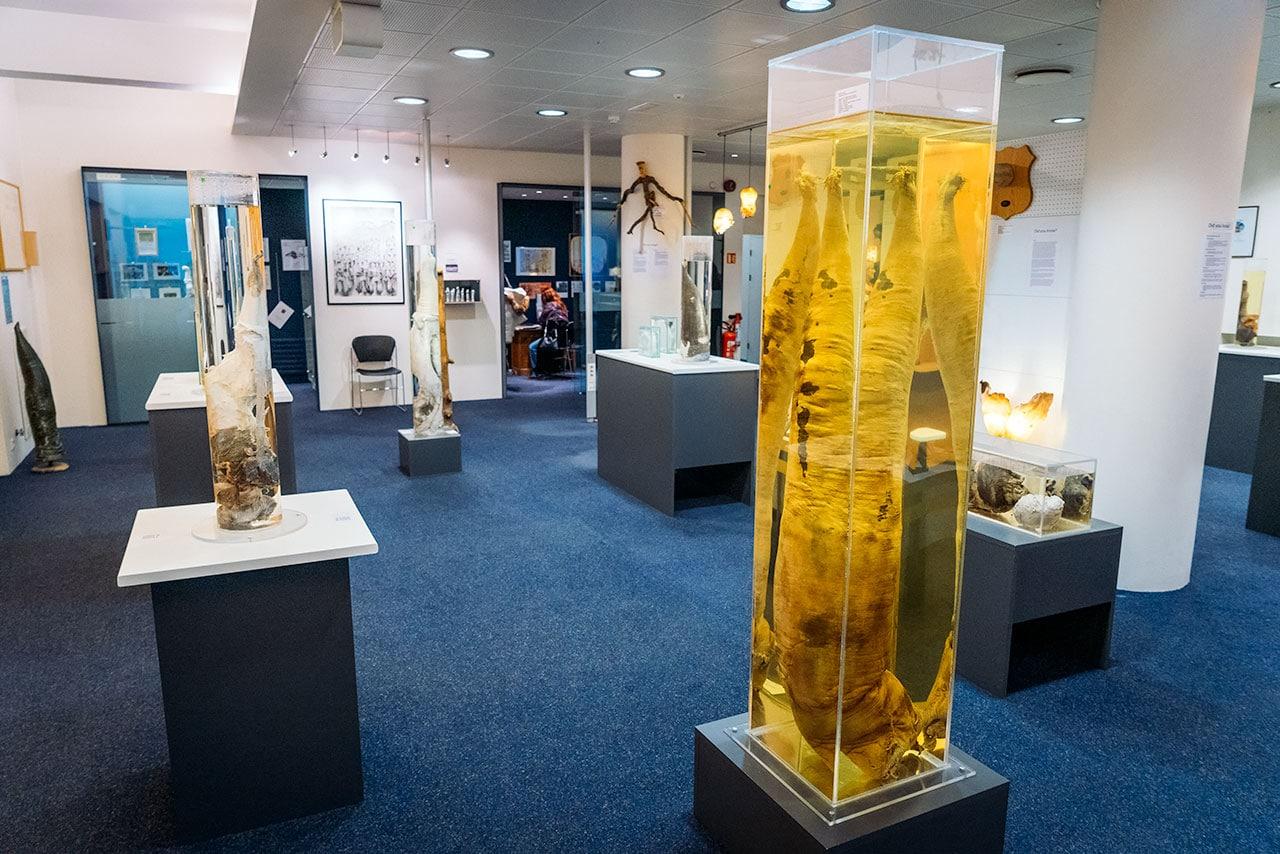 Iceland Phallological Museum