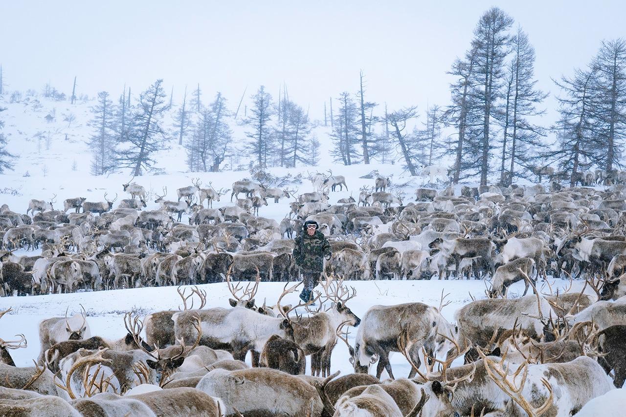 Even Reindeer Herder