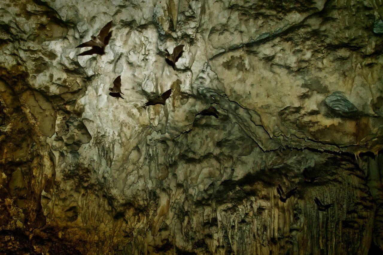 Lanquin Cave Bats Guatemala