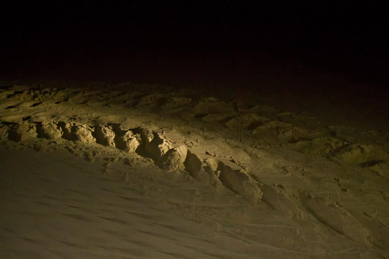 Leatherback Tracks South Africa