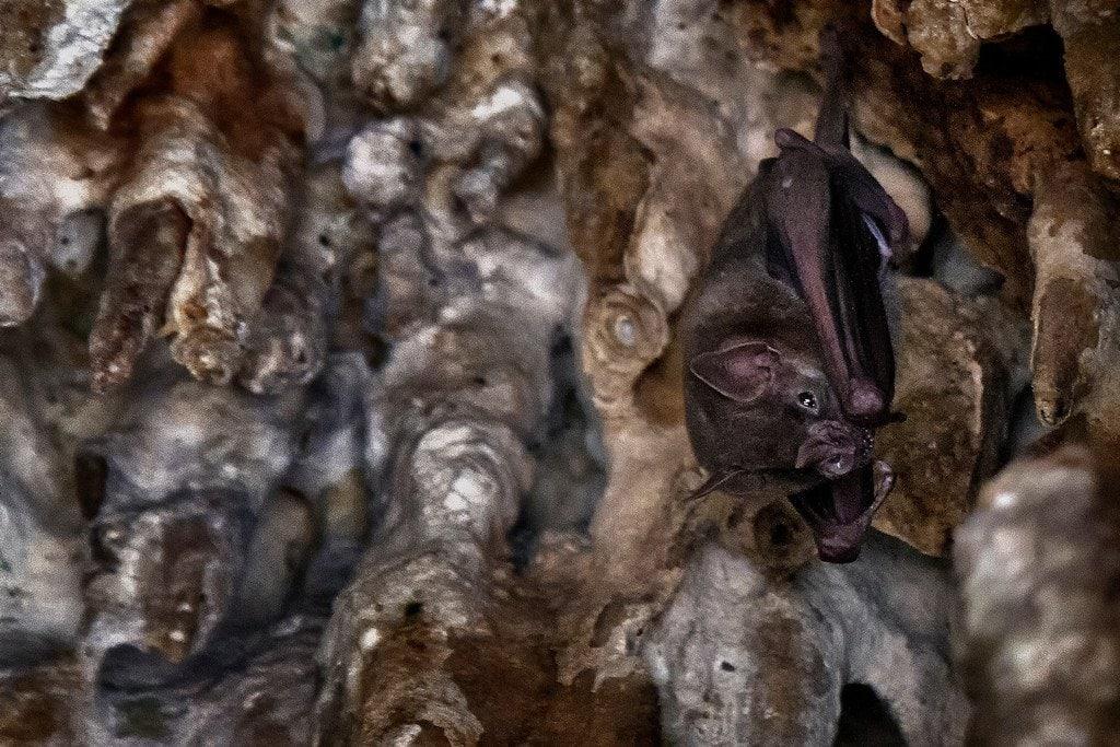 Dos Ojos Bat Cave Mexico