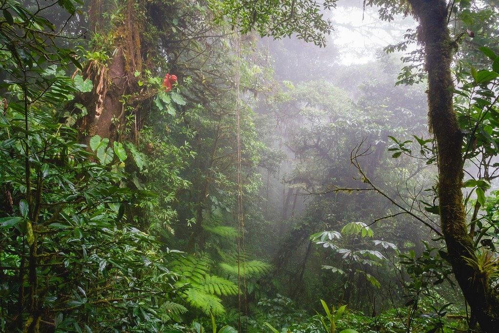 Exploring Monteverde Costa Rica