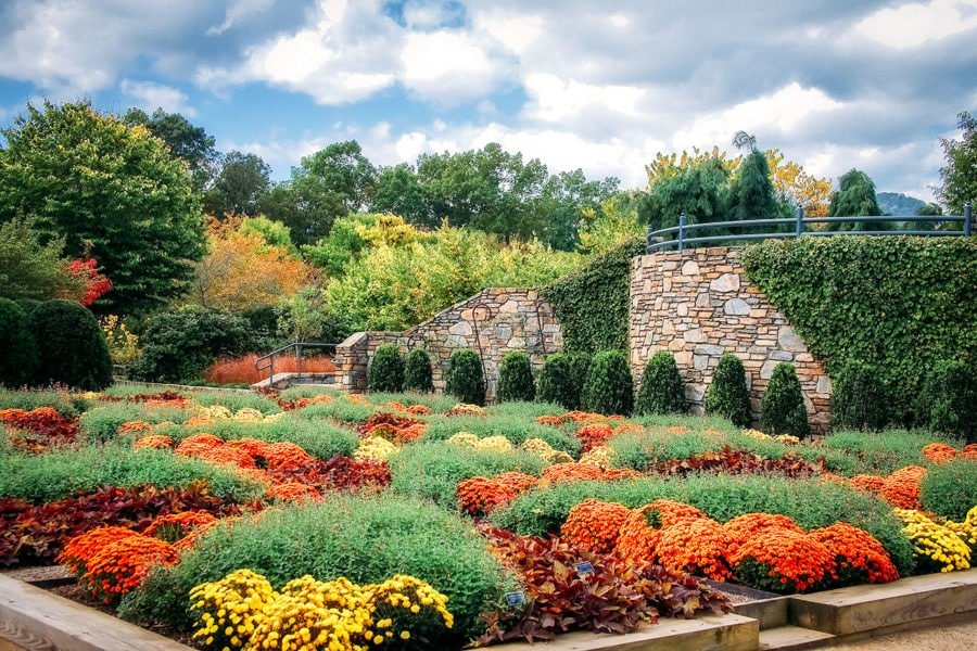 North Carolina Arboretum Flowers