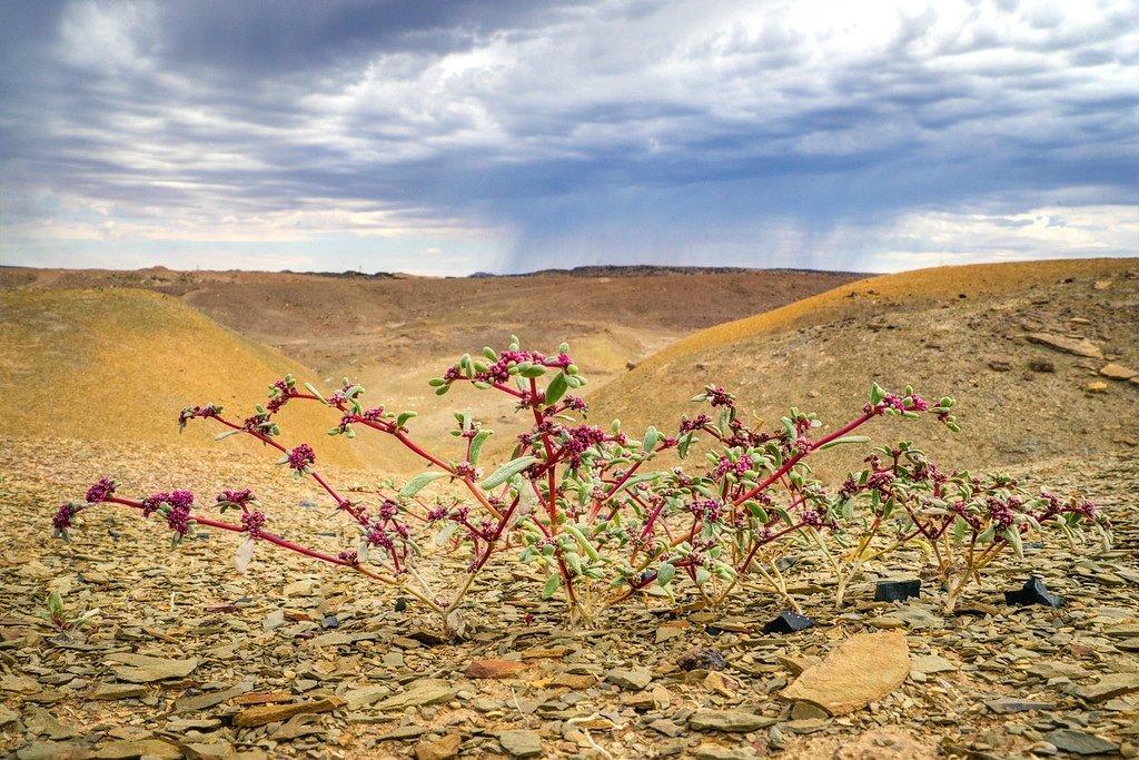 Orange River Desert