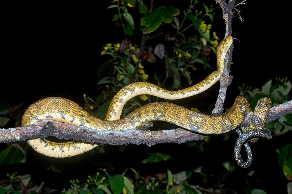 Costa Rica Snakes