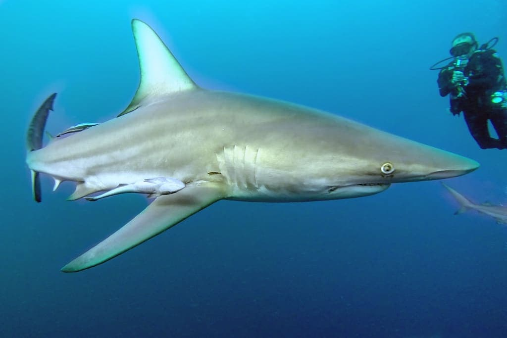 Sharks are Incredible Animals