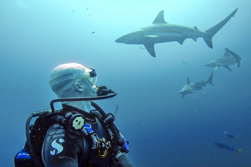 Diving with Sharks at Protea Banks
