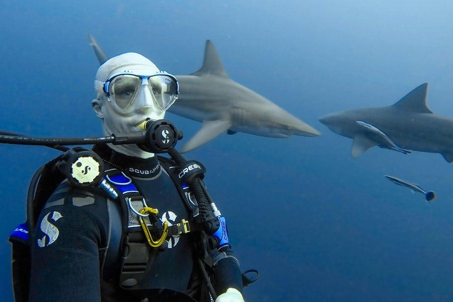 protea shark selfie
