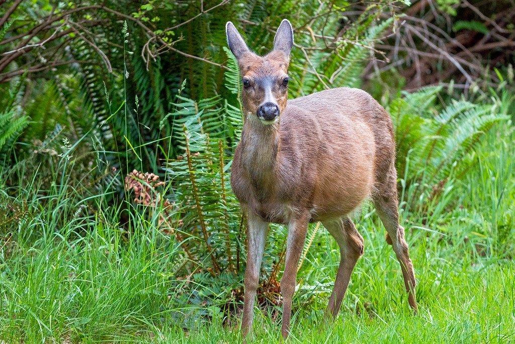 Vancouver Island Wildlife