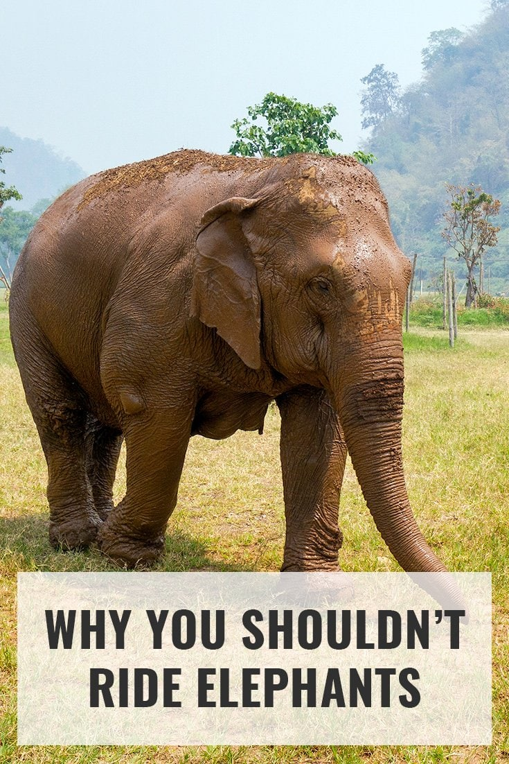 Why you shouldn't ride elephants. More at ExpertVagabond.com