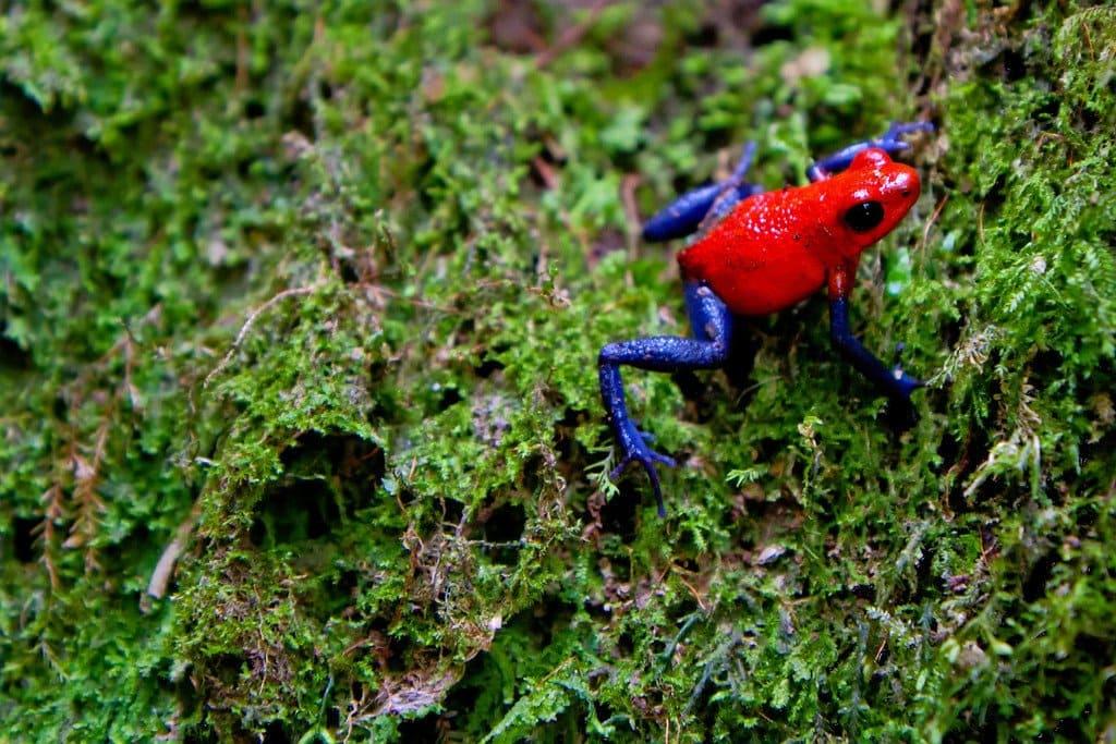 Frog near Rio Celeste Costa Rica