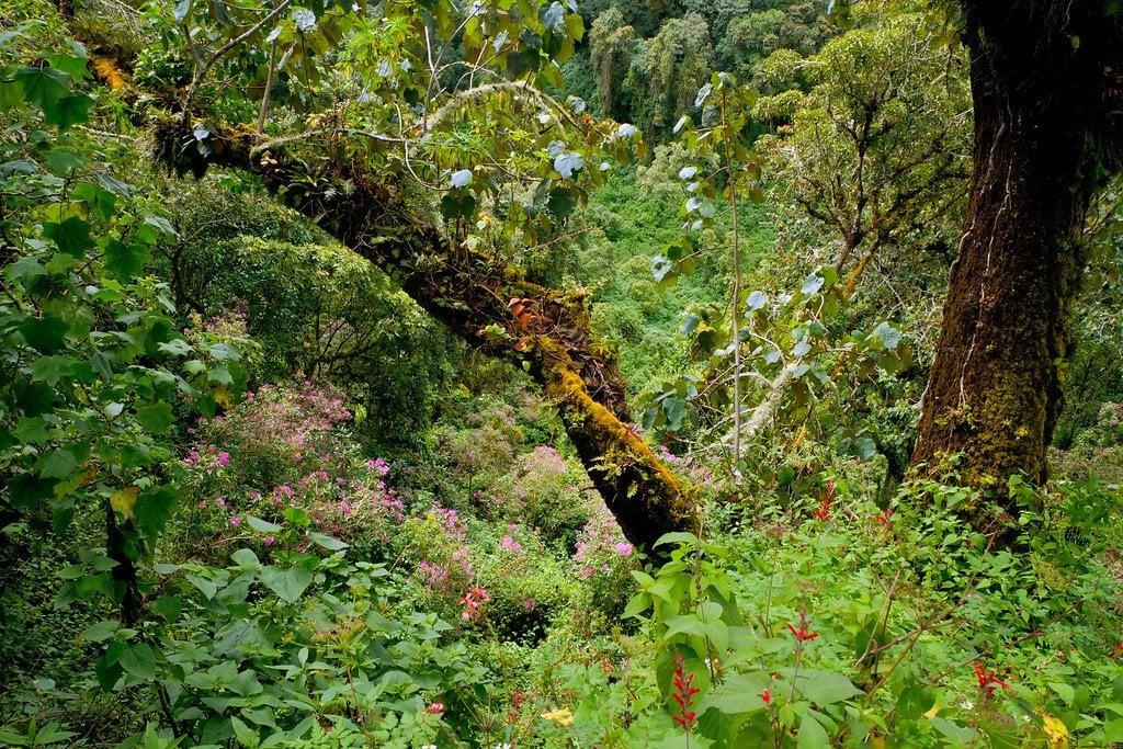 Thick Jungle Hike
