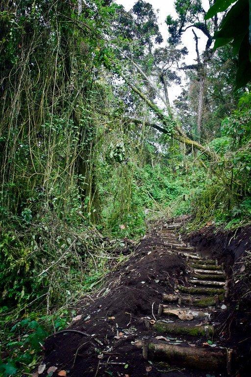 San Pedro Jungle Trail