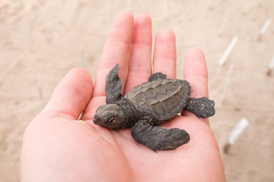 Sea Turtles near Cancun
