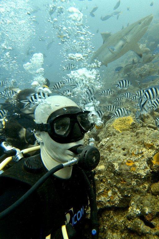 Scuba Diving with Sharks Fiji