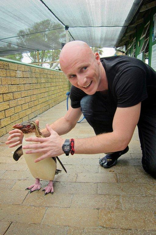 Rockhopper Penguin Sanccob South Africa