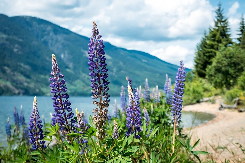 Vancouver Island Flowers