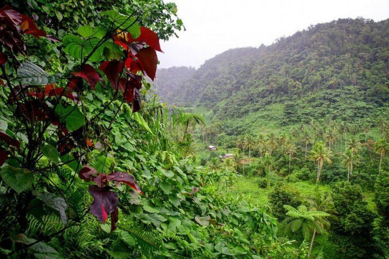Waterfalls Waterslides On Taveuni Island Expert Vagabond